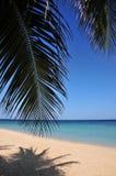 пристаньте карибское тропическое к берегу Стоковые Изображения