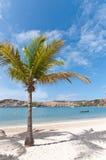пристаньте карибскую ладонь к берегу кокоса стоковые фотографии rf