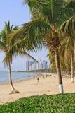 Пристаньте к берегу в тропическом с деревьями приятеля, Sanya, остров Хайнаня, Китай Стоковые Изображения