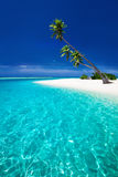 Пристаньте к берегу на тропическом острове при пальмы свисая лагуну Стоковые Фото