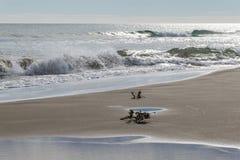 Пристаньте к берегу с волнами и остатками высушенных заводов на береге Стоковая Фотография