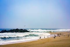 Пристаньте к берегу с seaguls и прибоем в тумане утра Стоковые Фото