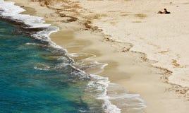 пристаньте Марину к берегу ita острова fetovaia elba di campo стоковое изображение
