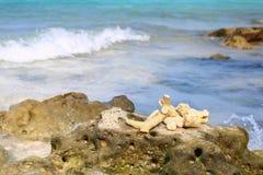 пристаньте море к берегу Стоковые Изображения RF