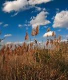 пристаньте облака к берегу Стоковые Фотографии RF