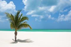 пристаньте пальму к берегу Стоковая Фотография RF