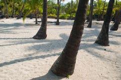 пристаньте пальмы к берегу Стоковые Фото
