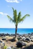 пристаньте пальму к берегу Стоковая Фотография