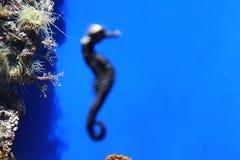 пристаньте празднество к берегу фантазии fanoe Дании дня летая поднимающее вверх высокого неба моря змея лошади солнечное Стоковое Изображение