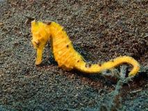 пристаньте празднество к берегу фантазии fanoe Дании дня летая поднимающее вверх высокого неба моря змея лошади солнечное Стоковая Фотография