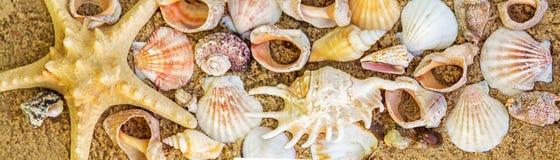 пристаньте прибой к берегу лета камней песка Кипра свободного полета среднеземноморской близкий seashell песка вверх Стоковые Фото