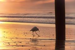 пристаньте прогулку к берегу стоковая фотография rf