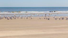 пристаньте птиц к берегу Стоковые Фотографии RF