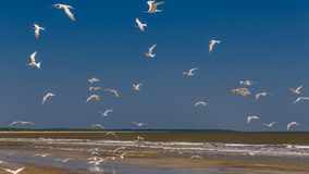 пристаньте птиц к берегу Стоковое Фото