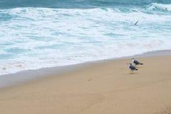 пристаньте птиц к берегу Стоковые Изображения RF