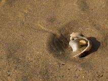 пристаньте раковину к берегу Стоковое Фото