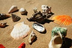 пристаньте раковины к берегу песка Стоковое Фото