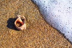 пристаньте раковины к берегу стоковое фото rf