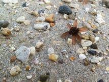 пристаньте раковины к берегу Стоковые Фотографии RF