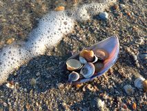 пристаньте раковины к берегу Стоковые Фото