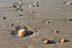 пристаньте раковины к берегу Стоковое Изображение