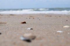 пристаньте раковины к берегу Стоковая Фотография