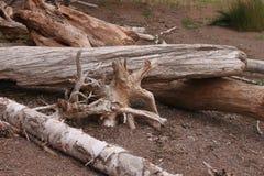 пристаньте древесину к берегу смещения Стоковое Фото