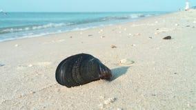 пристаньте серии к берегу экземпляра богато украшенный над песочными seashells seafoam seashore размечает их 3 моя Стоковые Фото