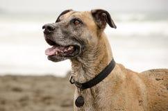 пристаньте собаку к берегу счастливую Стоковая Фотография