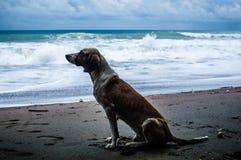 пристаньте собаку к берегу стоковая фотография