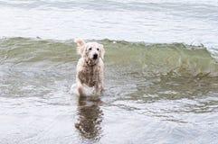 пристаньте собаку к берегу Стоковые Фото