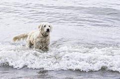 пристаньте собаку к берегу Стоковое Изображение RF