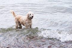 пристаньте собаку к берегу Стоковые Изображения