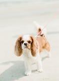 пристаньте собаку к берегу Стоковые Изображения RF