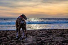пристаньте собаку к берегу Стоковое фото RF