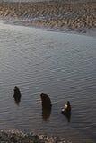 Пристаньте сцену к берегу, приливы вне с старыми деревянными столбами стоковые фото