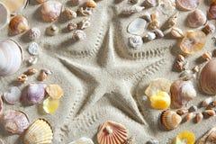 пристаньте clam к берегу белизна много starfish раковин песка печати Стоковое Изображение