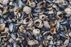 пристаньте seashells к берегу Стоковая Фотография RF