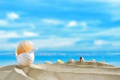 пристаньте seashells к берегу Стоковое Изображение