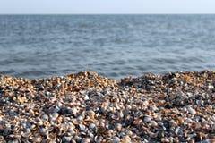 пристаньте seashells к берегу Стоковые Изображения RF