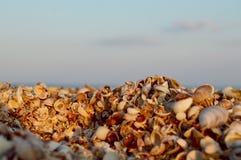 пристаньте seashells к берегу Стоковое Фото
