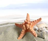 пристаньте starfish к берегу Стоковые Изображения