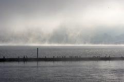 Пристань дока с чайками Стоковое Фото