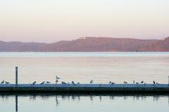 Пристань дока с чайками Стоковые Изображения