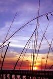 пристань травы Стоковая Фотография