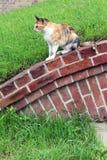 Пристальный взгляд кота вперед Стоковая Фотография