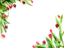 Присутствующая карточка с тюльпаном цветет шаблон углов Стоковые Фотографии RF