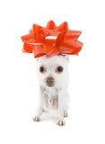 присутствующий щенок Стоковое Изображение RF