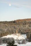 Приусадебный участок леса в зиме на Strathdon в Шотландии Стоковые Фото