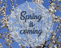 приходя весна Ветви вишневых цветов на предпосылке голубого неба Стоковое Изображение
